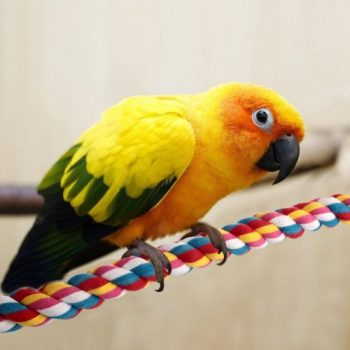 Top 9 Best Bird Perches: Fun and Enjoyable Perches Your Pet Will Love - Trustorereview