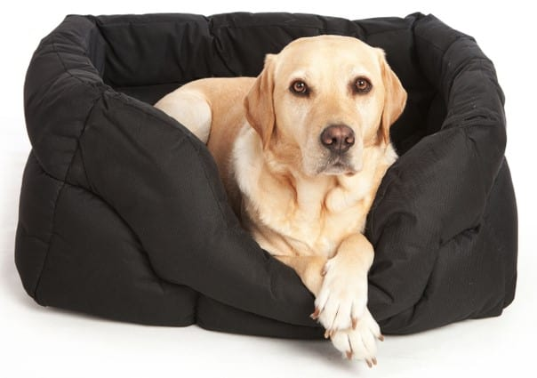 Top 9 Best Dog Bed Items: For Your Pet's Comfort and Relaxatio