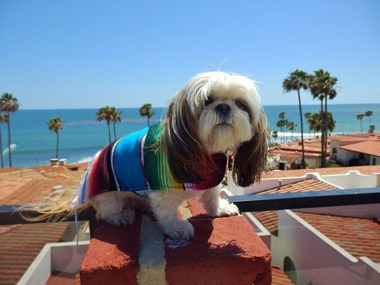 Top-9-Best-Pet-dog-clothes