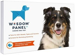Top Best Dog DNA Test Kits